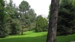 Bosque coníferas en el jardín botánico